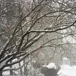 久しぶりの雪で寒いです。