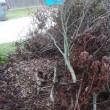 台風21号を振り返る・(3)折れた大量の枝の後始末