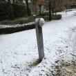 今日は雪降りです。