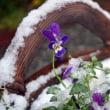 雪の日・・・癒されるもの