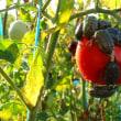 秋、冬野菜の種の確認