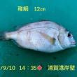 笑転爺の釣行記 9月10日☀ 浦賀港岸壁