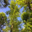 新緑眩しい季節