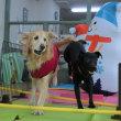 年末年始のスケジュールのご案内です(*^-^*)  犬のしつけ教室@アロハドギー