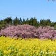 春色の渥美半島~その2~♪