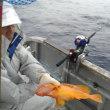 イサキ釣りに♪