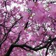 【 春よ来い 待ち遠しくて 暖かさ 】春川柳