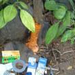 マンダリンの防菌処理