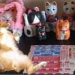 『猫が教えてくれたこと』を見て♪年末ジャンボ宝くじ買ってきました【猫日記こむぎ&だいず】2017 12 04