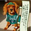 飯田の水引祝儀袋を頂きました