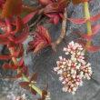 昼餉&買い物&街の花