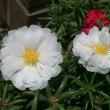 水を貯える花