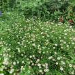 わたしの花壇は夏