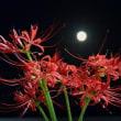 満月と彼岸花・・・【いな】