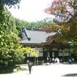 深大寺の杉