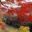 東近江の秋 名刹・紅葉の名所「永源寺」(11/21)