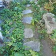 ミーコ・クリスマスローズ・ガーデン(2272)