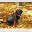 ☆☆☆ 家庭犬の健康管理を考える/テキトー過ぎる飼主の存在~土曜日・・・