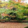 紅葉が最高の有馬瑞宝寺公園 2018.11.13