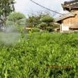 みかん園の消毒