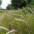 季語を刈り取る国土交通省