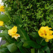 デジブラ 夏の花お借りしました