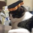 猫じゃらし扇風機【猫日記こむぎ&だいず】2018 07 06