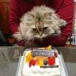 レオくん、5歳の誕生日!