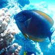 Nikon Freak113. 魚の名前