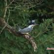 幼鳥の季節 11