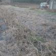 静かな畑の正月