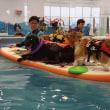 魚焼き器と泳ぐ犬?
