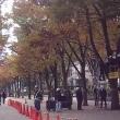 今年も青の洞窟SHIBUYA 開催☆彡 11月30日