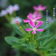 photo poem     - 秋風 -