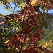 ●蔵出しの黒部ダム 黒部平(立山黒部アルペンルート) テレビ番組(北アルプス 空中散歩)