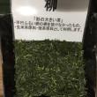 茶畑から煎茶になるまで