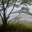 マンデリンアイスコーヒーのオーダーもある晴天午後の森。