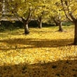 もうすっかり秋だニャー=^x^=