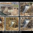 寒空の中 近所で鳥見