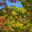 黄葉の深入山