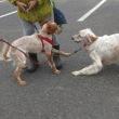 九十九里浜での犬散歩にて