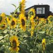 早や猛暑の夏 「ひまわりの丘公園」 を散策す・・・