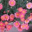 久し振りに家の花を生けました~~!