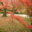 京都・街歩きⅤ