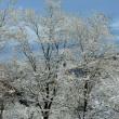 寄せ植え。雪の晴れ間。