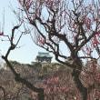 送別会の京都市は3月中旬並の14℃だそうです