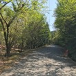 デローザで新緑の青山高原