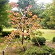 金沢城公園の植物と兼六園の紅葉