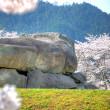 石舞台と桜