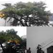 10月11日(木)今日の北川桜